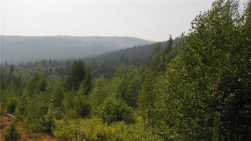 136Acres Sugar Lake-Sihlis Road Vernon Photo 10