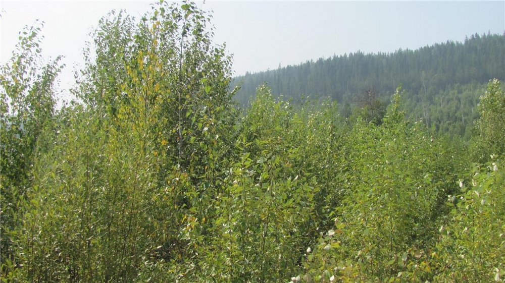 136Acres Sugar Lake-Sihlis Road Vernon Photo 29